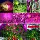 Лампа для растений 15Вт, 75х светодиодов, широкий спектр, 810LM